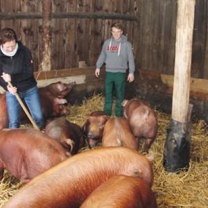 Alexander Rengstorf hält für die Feinschmecker Duroc-Schweine. Foto: (so)