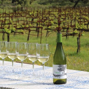 Der andalusische Weißwein hat in den vergangenen Jahren an Bedeutung gewonnen. Foto: so