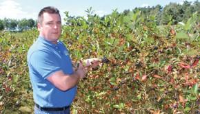 Lars Grossmann hat bereits Erfahrungen über viele Jahre im Aronia-Anbau. Foto: so